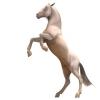 Equestrian center: Darkened Skies Stables