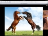 Equestrian center: Sky stable