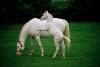 Equestrian center: Ruffian's Racing Stable
