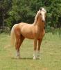 Equestrian center: Stardust Academy