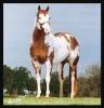 Equestrian center: Pixie Horse Institute