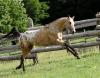 Equestrian center: Krazy K's Riding Ranch
