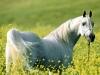 Equestrian center: we care for horsez
