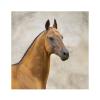 Amber2610 - Horzer horse breeder