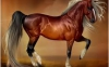 Championgirl174 - Horzer horse breeder