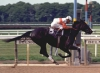 ruffian7 - Horzer horse breeder