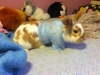 bunnylover333 - Horzer horse breeder