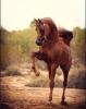 Moonlightgirl - Horzer horse breeder