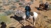 Autee135 - Horzer horse breeder