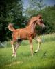 william123m - Horzer horse breeder