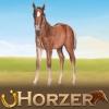 Dreamzer - Horzer horse breeder