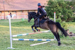 Pegaz de Monsures - Male French Saddle Horse (16 years)