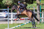 Pegaz de Monsures - Male French Saddle Horse (15 years)