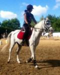 Gérico - Male Arabian Horse (12 years)