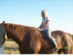 Red - Male Arabian Horse (8 years)