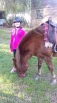 malambo - Male Friesian Horse (10 years)