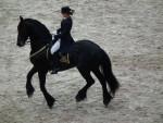 Aiso - Male Friesian Horse (15 years)