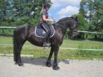 une des photo de moi et London - Friesian Horse (14 years)