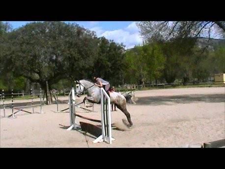 Famosa - Lipizzan (6 years)