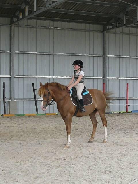 saphir et moi - Lipizzan (6 years)