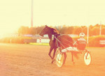 First Race of the Morning - Standardbred