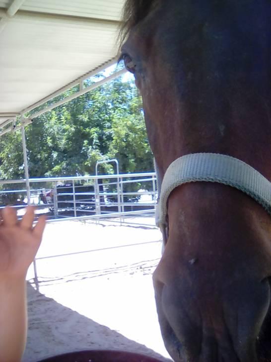Hanna - Connemara Pony (7 years)