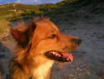 Mouphy, un pur batard !! - Dog