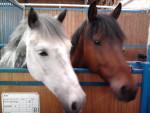Océane et Pichoune - (4 years)