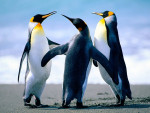 Suida, Kieka, Rophis - Penguin (2 years)