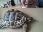 Lola - Turtle