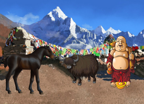 From the heart of the Himalaya, the Bhutan pony has come to Horzer!